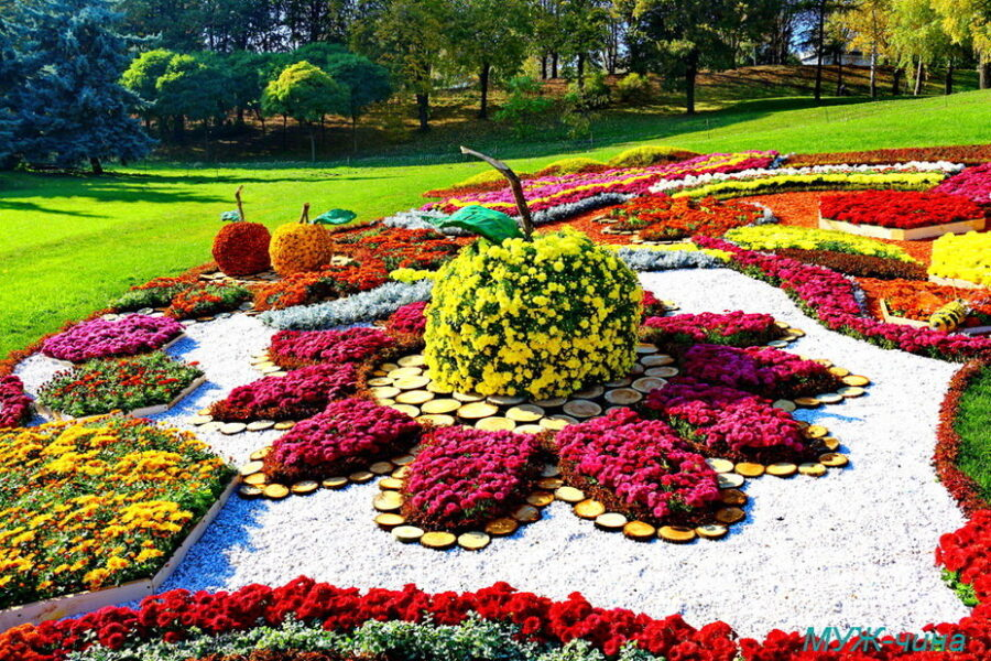 поездка на фестиваль хризантем с клубом путешественников Котигорошко
